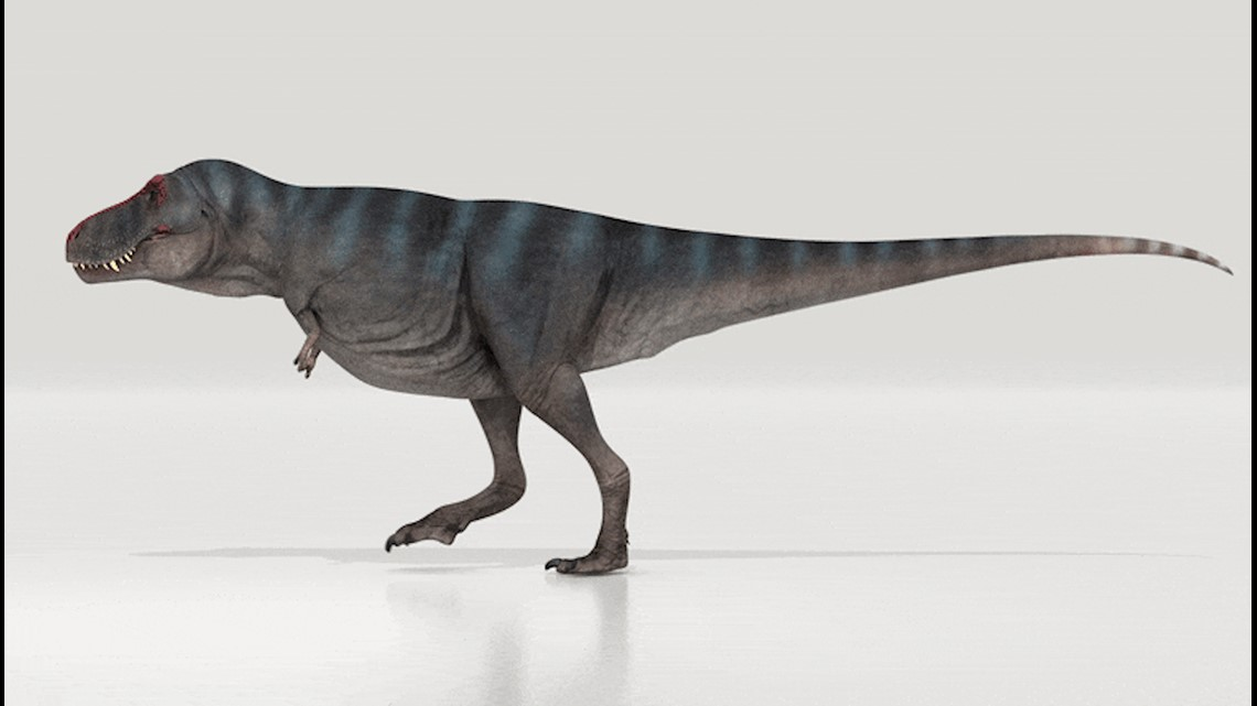 New Study Finds that the T-Rex was Actually a Slow Walker