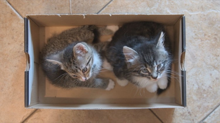 Cats Love Sitting in Box Illusions Just as Much as Real Boxes