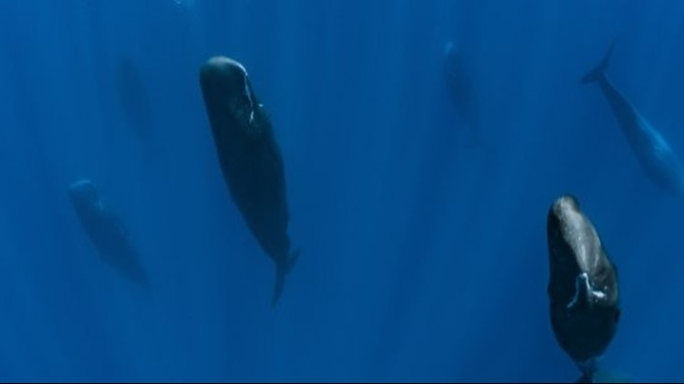 These Jaw-Dropping Images Show Sperm Whales Sleeping Vertically
