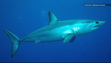 World's Fastest Shark and 16 Other Species Now Face Extinction
