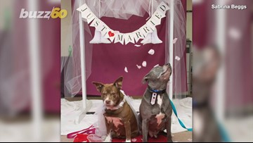 This Doggie Wedding Is The Sweet Story You Need