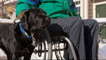 VERIFY: Yes, a service dog without its handler could be looking for help