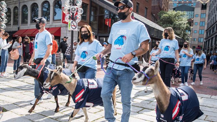 Goats welcome NFL's Tom Brady, parade down Boston streets in Patriots jerseys