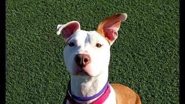 Want to adopt a pet? Here are 7 delightful doggies to adopt now in Cleveland