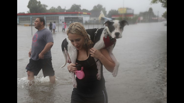Naomi Coto carries Simba on her shoulders as they evacuate their home after the area was inundated with flooding from Hurricane Harvey on August 27, 2017 in Houston, Texas.