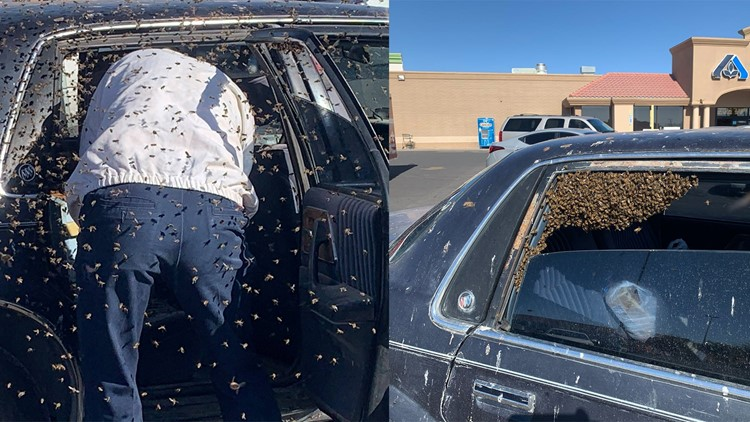 Thousands of bees took temporary residency inside man's car while he was grocery shopping