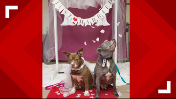 Senior dogs get 'married' at shelter to help them be adopted together