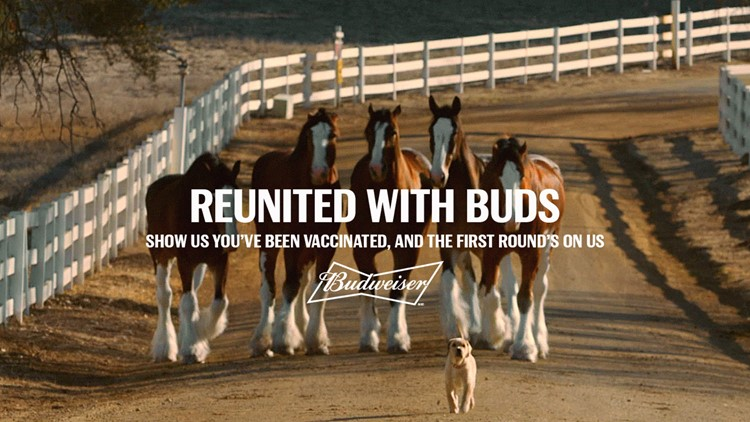 Budweiser offering free beer if you've been vaccinated