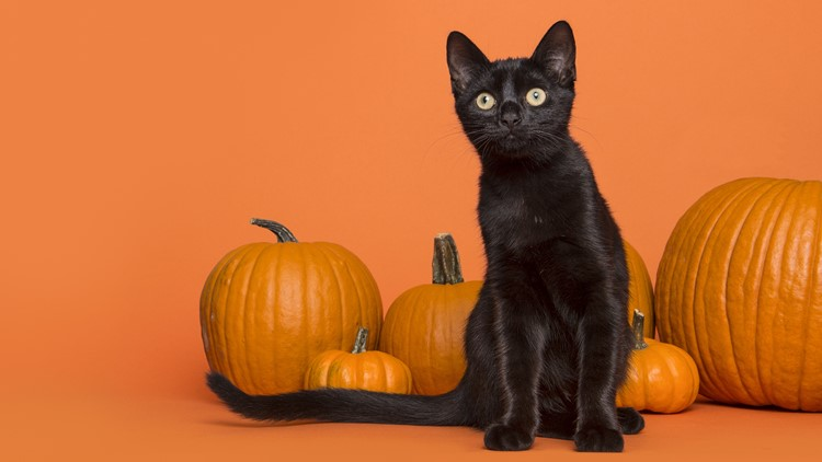 Keep your pet safe this Halloween with these simple tips