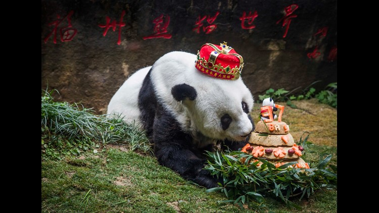 The panda, named Basi, was 37 years old.