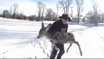 Brave Deputies Save Desperate Deer from the Waters of Frozen Pond