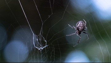 Man Suffering From Earache and Vertigo Discovers Spider Trapped In His Ear