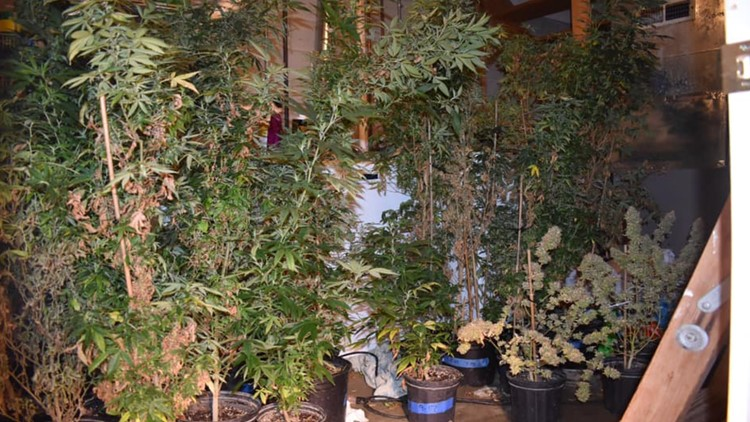 Police: Ohio man arrested after 107 marijuana plants found in home