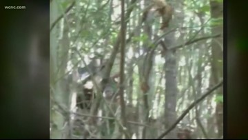North Carolina man claims he spotted 3 Bigfoots