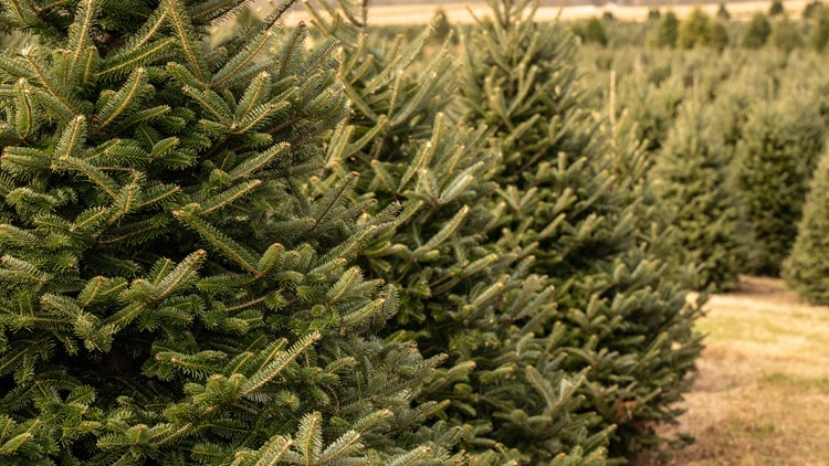 VERIFY: Yes, there is a Christmas tree shortage this year, here's why