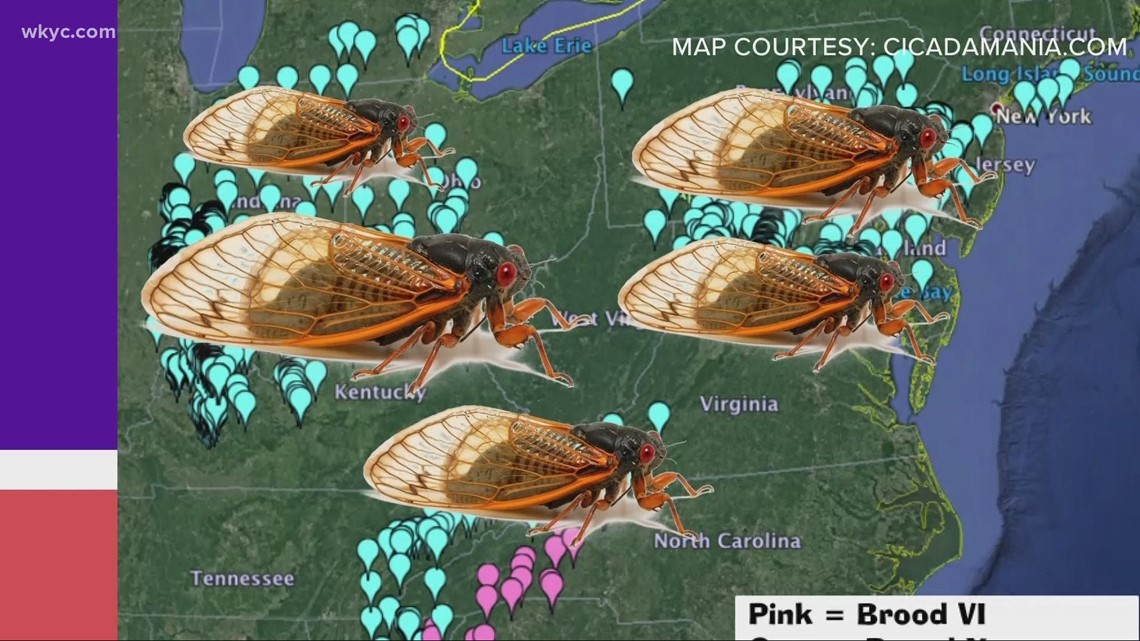 Billions of 17-year cicadas expected to emerge in 2021
