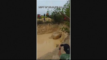 Video: Elephants rescued from Malaysian mining pool