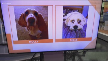 Doggone Weather: Molly & Miles