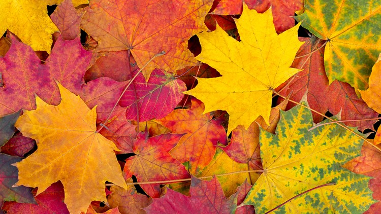 Fall leaves are changing colors and we want to see your photos