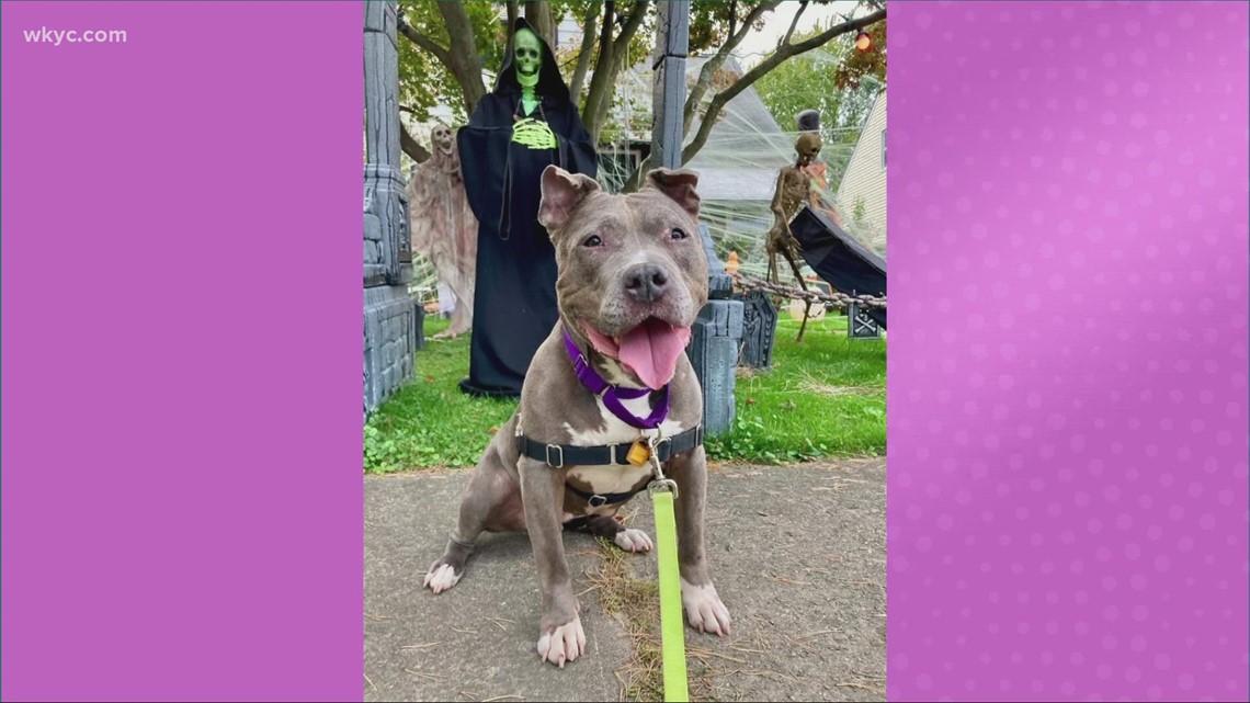 Adopt-A-Pet: Meet Juneau, Chewy, & Verona.