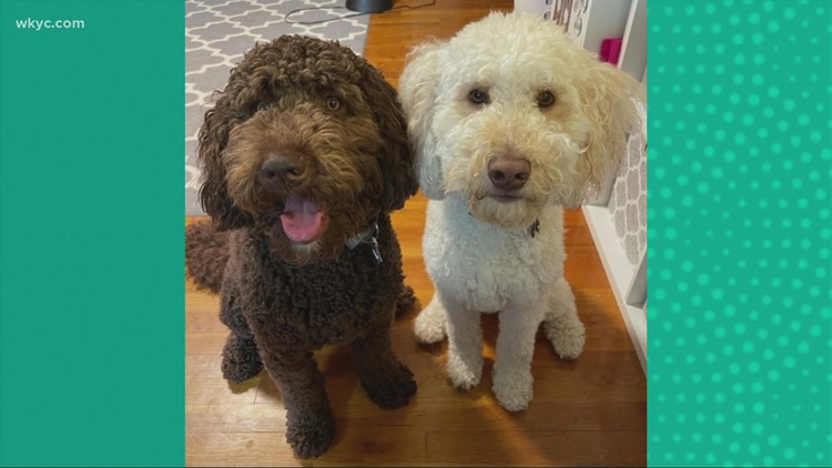 Doggone Weather: Callie & Lulu.