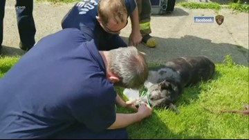 Canton Fire Department rescues dog from burning home