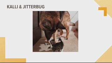 Doggone Weather: Kalli & Jitterbug