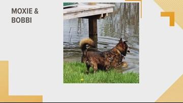 Doggone Weather - Moxie & Bobbi