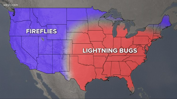 The best places to see lightning bugs: GO-HIO adventures