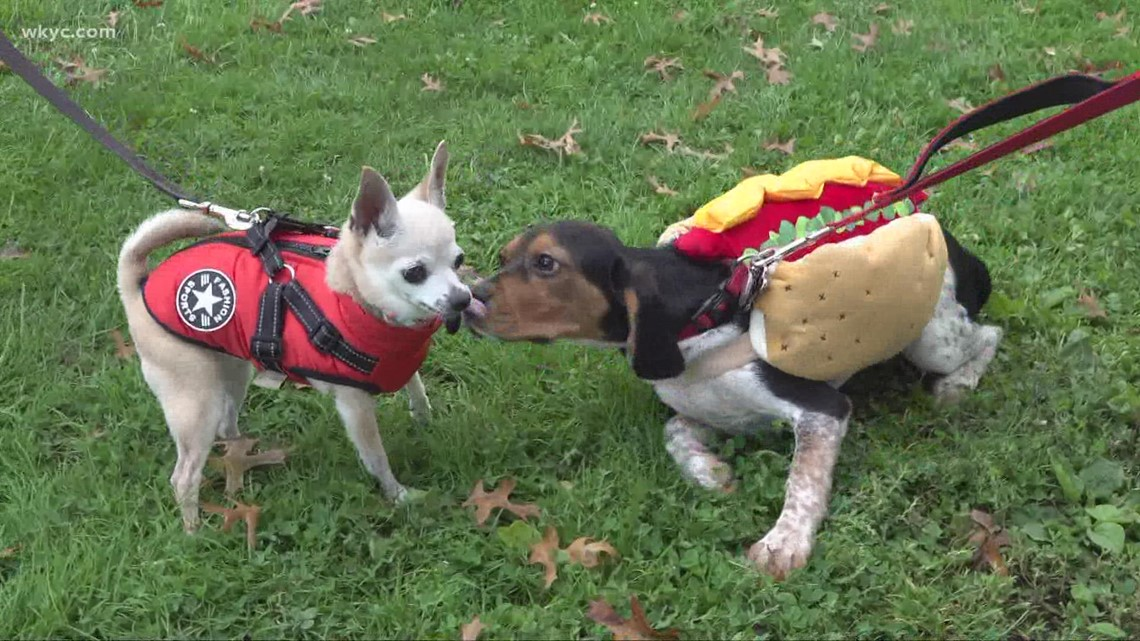 Pups sport adorable costumes at Lakewood's 14th annual Spooky Pooch Parade!
