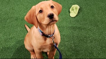 How to make sure your dog's toys are safe: Roxy's handler offers expert advice