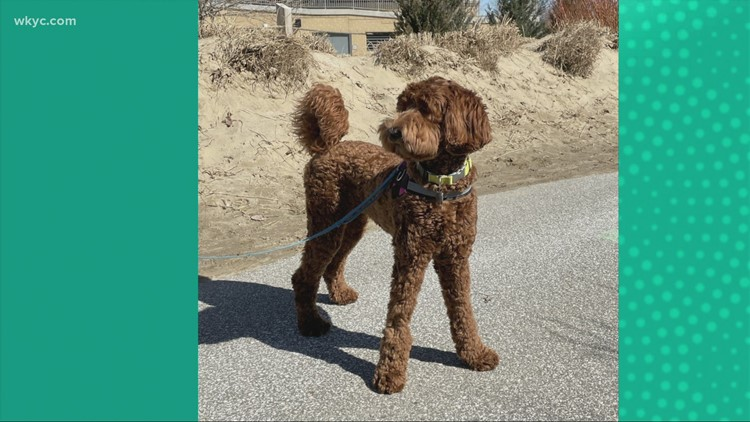 Doggone Weather:  Lucy