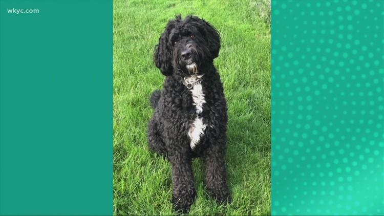 Doggone Weather:  Finn