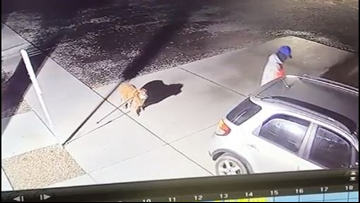 Heartbreaking video: Masked man abandons dog, pig outside Tuscarawas County Humane Society