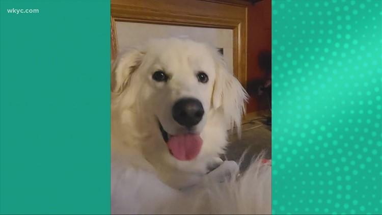 Doggone Weather:  Koda