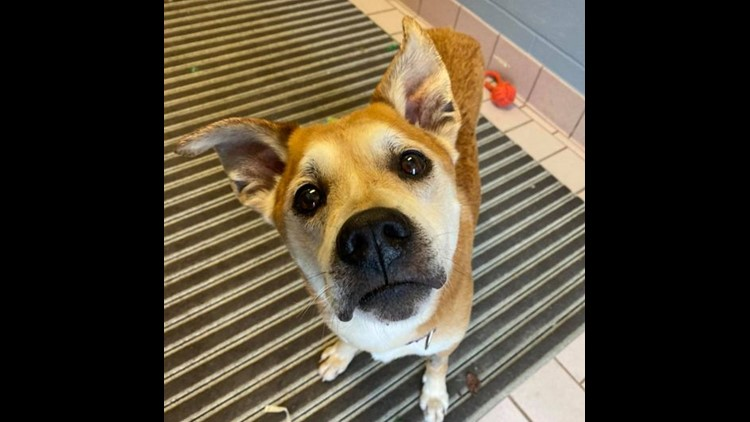 16-year-old Cuyahoga County Shelter dog looking for his forever home!