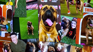 Cleveland Browns fans say final goodbye to beloved former mascot Swagger