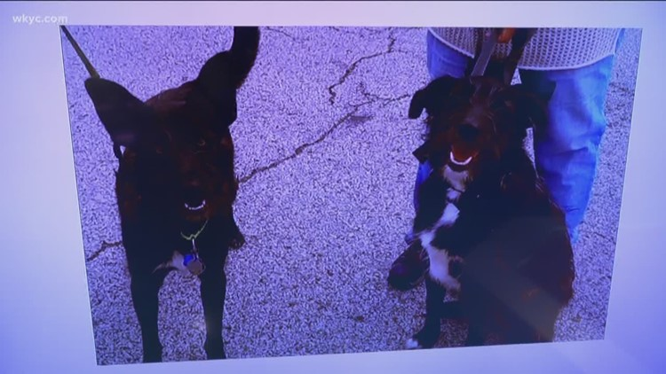 Doggone Weather: Opie & Truman