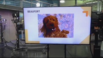 Doggone Weather: Beaufort
