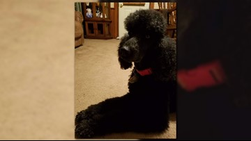 $1,000 reward offered for couple's missing service dog