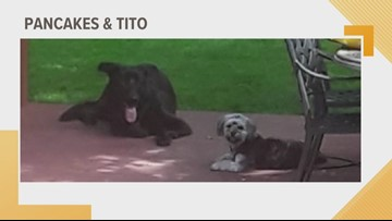 Doggone Weather:  Pancakes & Tito