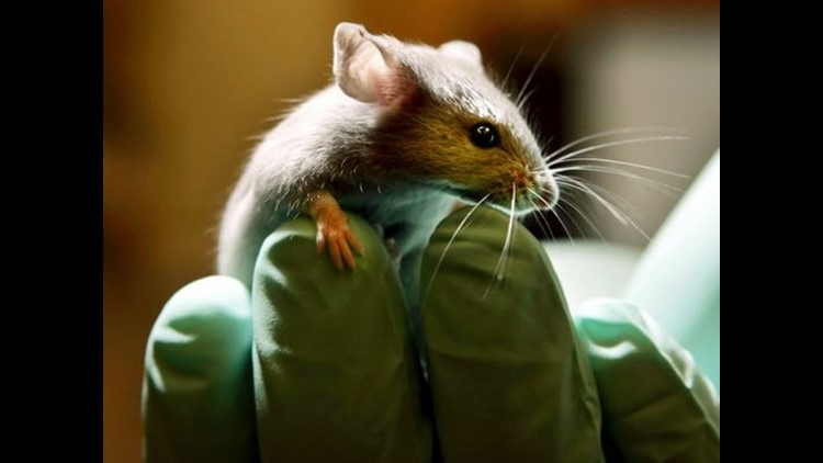 PETA alleges Cleveland Clinic is mistreating lab mice