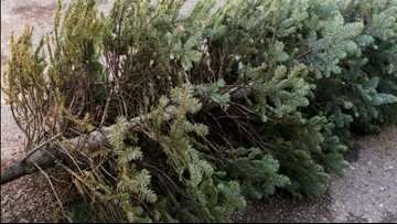 Here's how to dispose of your Christmas tree while helping wildlife