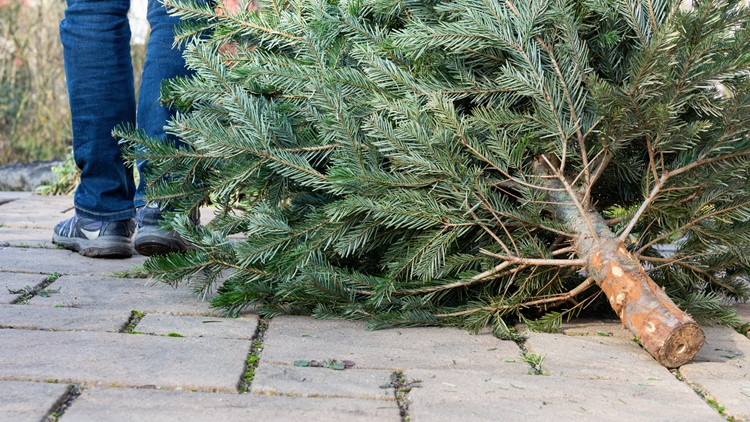 A greener holiday: How to recycle your live Christmas tree