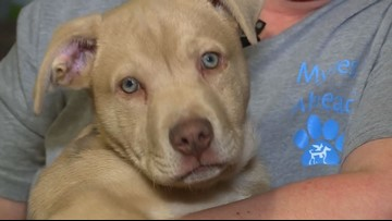 Ohio dog needs a home after it was saved by Narcan