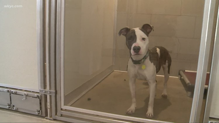 Clear the Shelters: Animal abusers put on notice as Ohio pushes for tougher laws