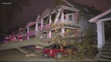 Wind blows down massive tree on Cleveland's west side, just misses baby