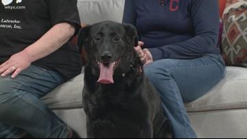 Adopt-A-Pet: Meet Smokey