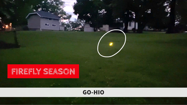 GO-HIO | Lightning bug season has arrived: Where to see them