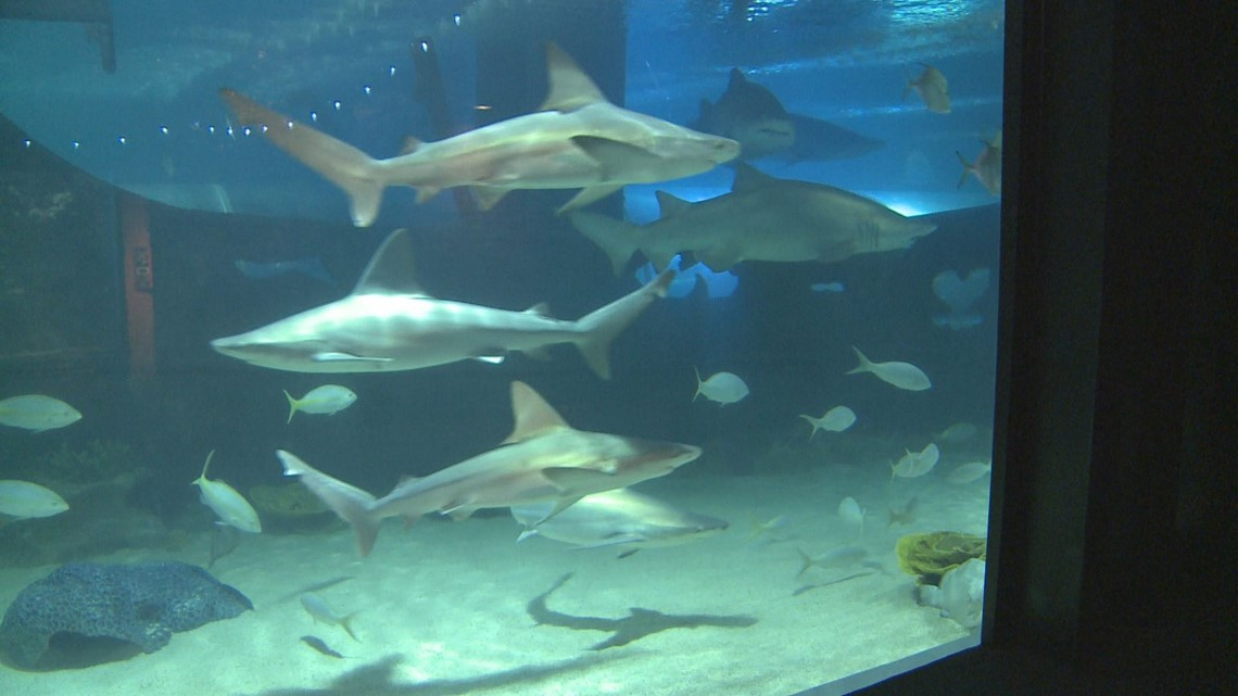WATCH LIVE | Changes coming to Cleveland Aquarium: Officials reveal upgrades